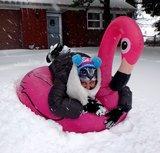 opblaasbare flamingo sneeuw