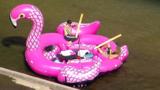 opblaasboot flamingo